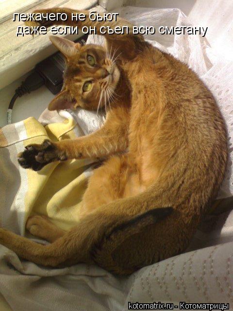 Котоматрица: лежачего не бьют даже если он съел всю сметану