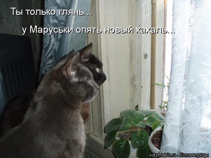 Котоматрица: Ты только глянь... у Маруськи опять новый хахаль...