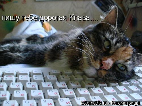 Котоматрица: пишу тебе дорогая Клава....