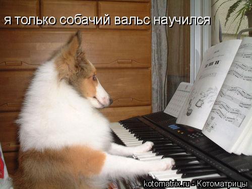Котоматрица: я только собачий вальс научился