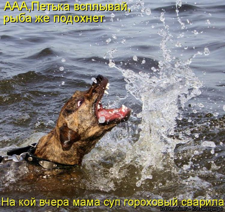 Котоматрица: ААА,Петька всплывай, рыба же подохнет На кой вчера мама суп гороховый сварила?!