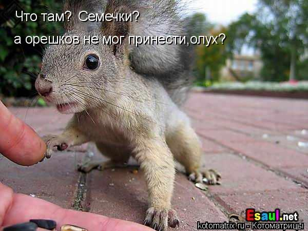 Котоматрица: Что там? Семечки? а орешков не мог принести,олух?