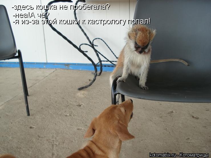 Котоматрица: -здесь кошка не пробегала? -неа!А чё? -я из-за этой кошки к кастрологу попал!