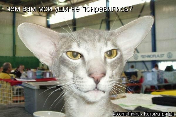 Котоматрица: чем вам мои уши не понравились?