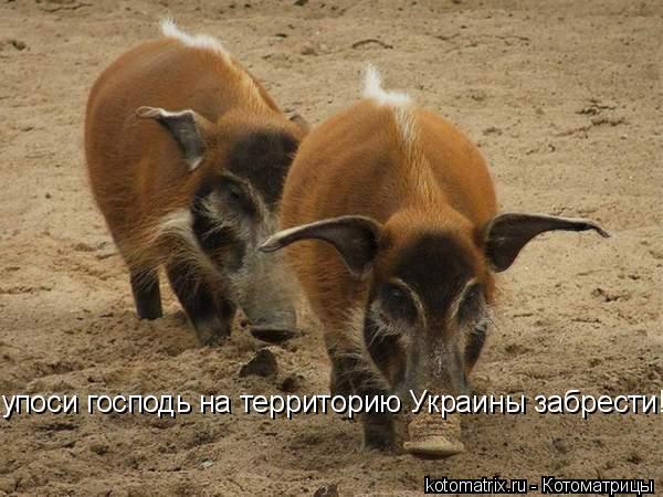 Котоматрица: упоси господь на территорию Украины забрести!