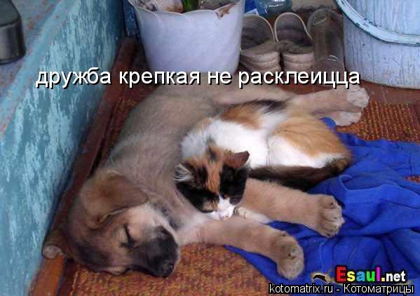 Котоматрица: дружба крепкая не расклеицца