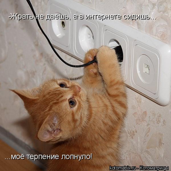 Котоматрица: -Жрать не даёшь, а в интернете сидишь... ...моё терпение лопнуло!