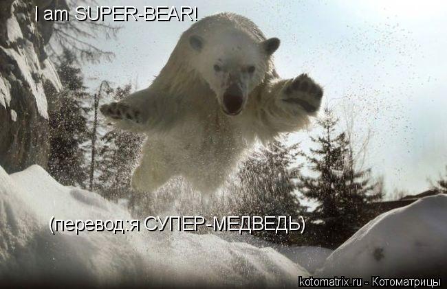 Котоматрица: I am SUPER-BEAR! (перевод:я СУПЕР-МЕДВЕДЬ)