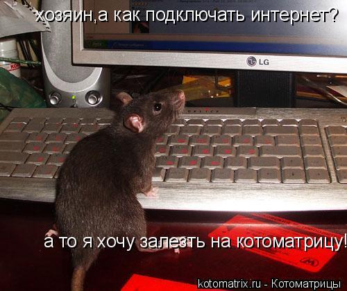 Котоматрица: хозяин,а как подключать интернет? а то я хочу залезть на котоматрицу!