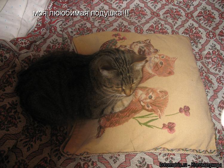 Котоматрица: моя лююбимая подушка!!!