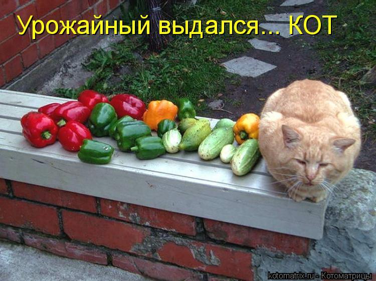 Котоматрица: Урожайный выдался... КОТ