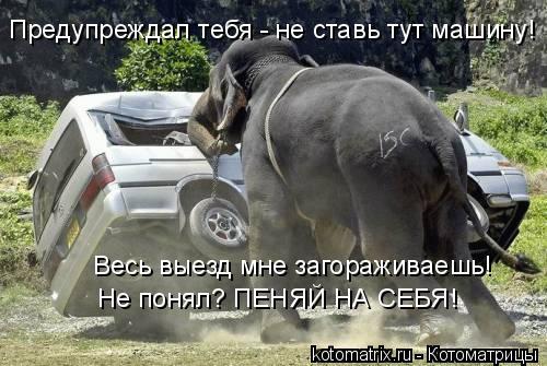Котоматрица: Предупреждал тебя - не ставь тут машину! Весь выезд мне загораживаешь! Не понял? ПЕНЯЙ НА СЕБЯ!