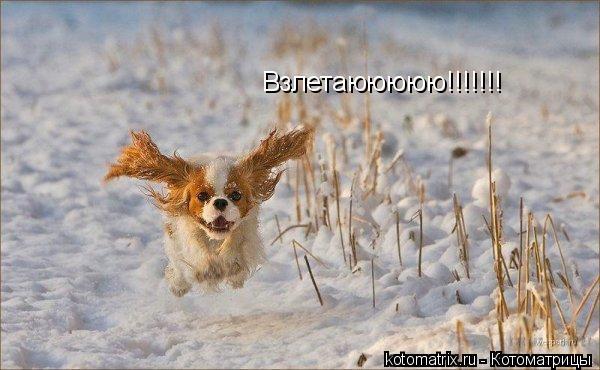 Котоматрица: Взлетаююююю!!!!!!!