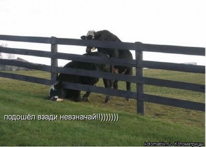 Котоматрица: подошёл взади невзначай!!)))))))
