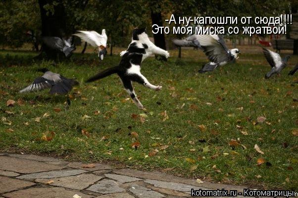 Котоматрица: -А ну-капошли от сюда!!!! Это моя миска со жратвой!