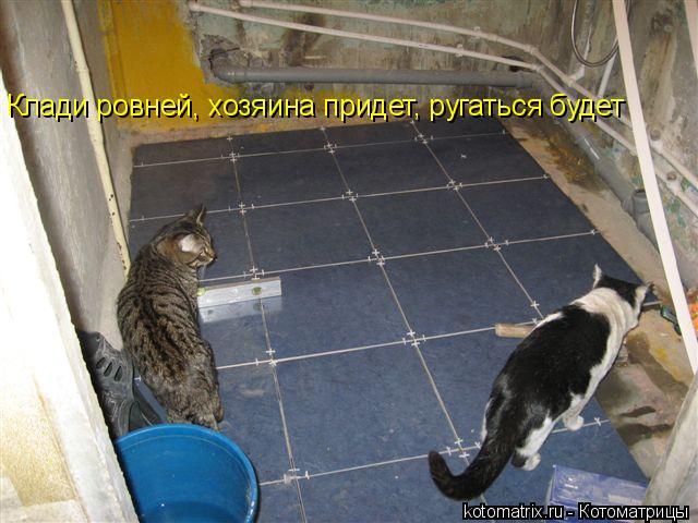 Котоматрица: Клади ровней, хозяина придет, ругаться будет