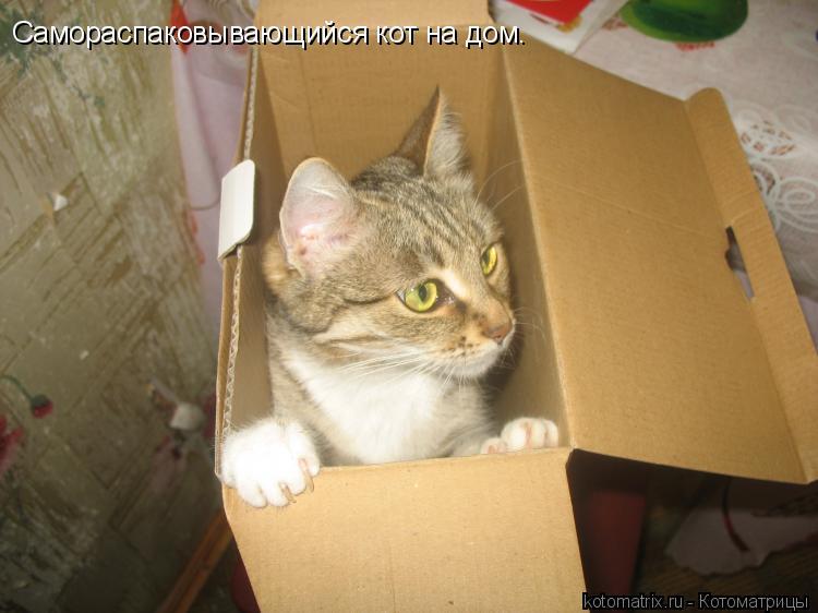Котоматрица: Самораспаковывающийся кот на дом.