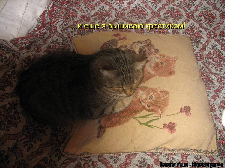Котоматрица: ...и еще я вышиваю крестиком!
