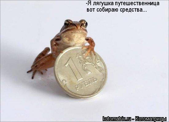 Котоматрица: -Я лягушка путешественница вот собираю средства...