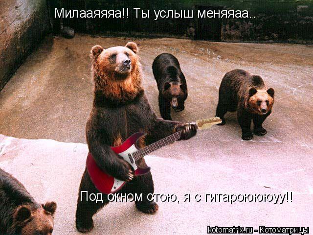 Котоматрица: Милааяяяа!! Ты услыш меняяаа.. Под окном стою, я с гитароюююуу!!