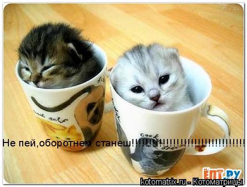 Котоматрица: Не пей,оборотнем станеш!!!!!!!!!!!!!!!!!!!!!!!!!!!!!!!!!!!!!!