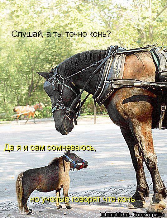 Котоматрица: Слушай, а ты точно конь?  Да я и сам сомневаюсь,  но ученые говорят что конь.