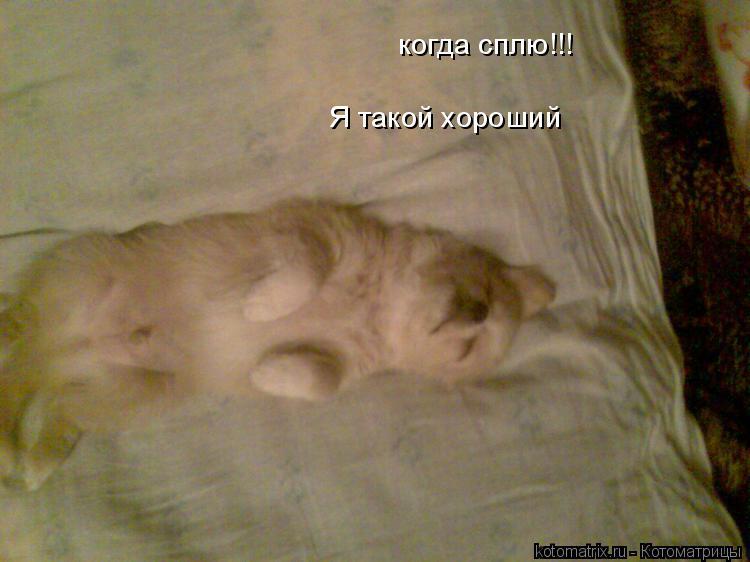 Котоматрица: Я такой хороший  когда сплю!!!