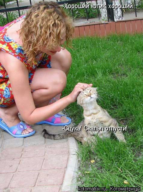 Котоматрица: -Хороший котик, хороший... -Сцука! Скальп отпусти!