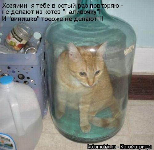"""Котоматрица: Хозяиин, я тебе в сотый раз повторяю -  не делают из котов """"наливочку""""!  И """"винишко"""" тоооже не делают!!!"""