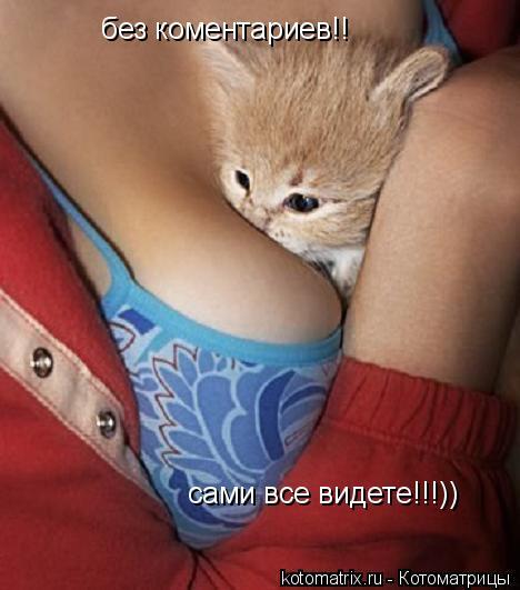 Котоматрица: без коментариев!! сами все видете!!!))