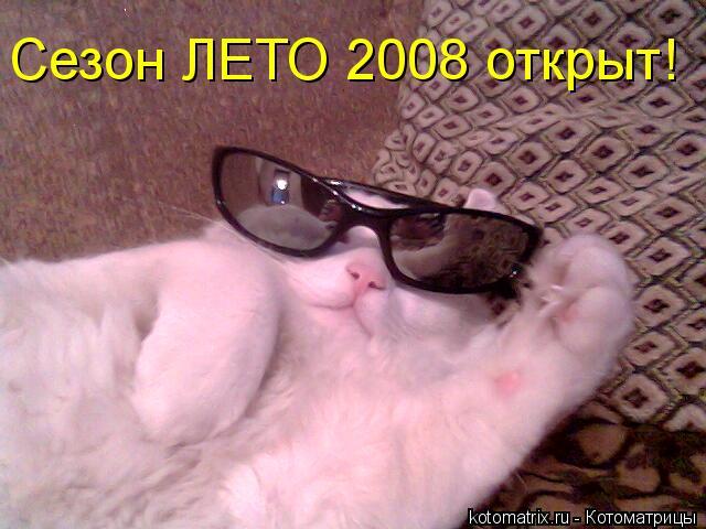 Котоматрица: Сезон ЛЕТО 2008 открыт!