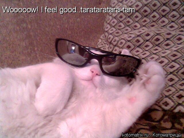 Котоматрица: Wooooow! I feel good..tarataratara-tam