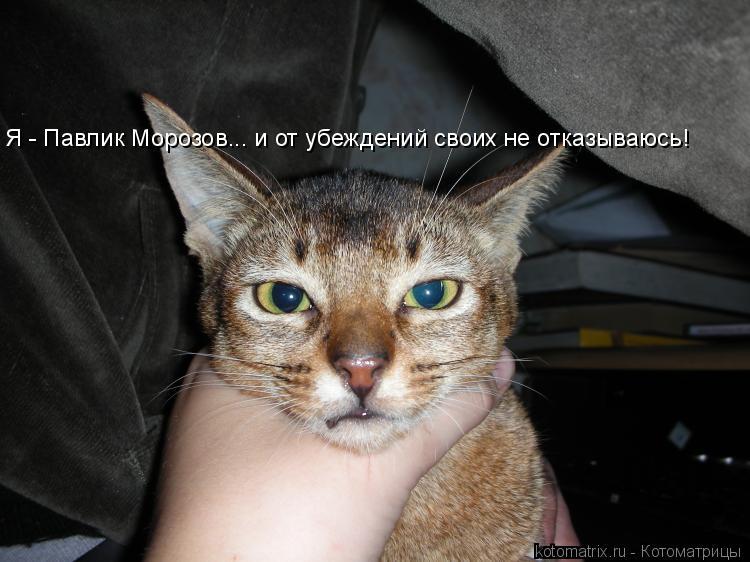 Котоматрица: Я - Павлик Морозов... и от убеждений своих не отказываюсь!