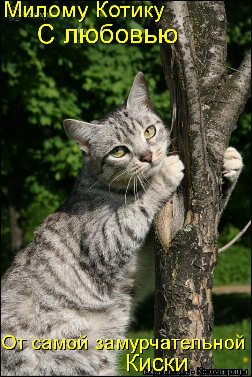 Котоматрица: Милому Котику С любовью От самой замурчательной Киски