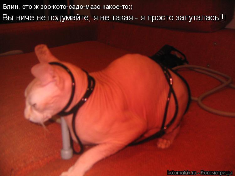 Котоматрица: Блин, это ж зоо-кото-садо-мазо какое-то:) Вы ничё не подумайте, я не такая - я просто запуталась!!!