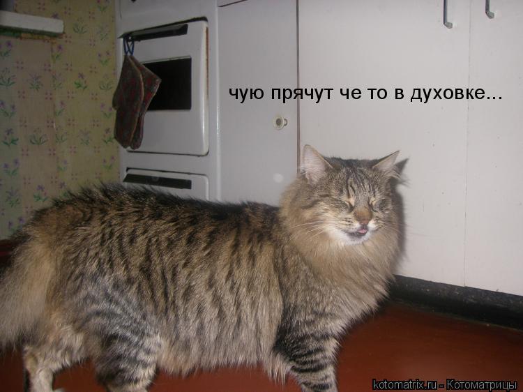Котоматрица: чую прячут че то в духовке...