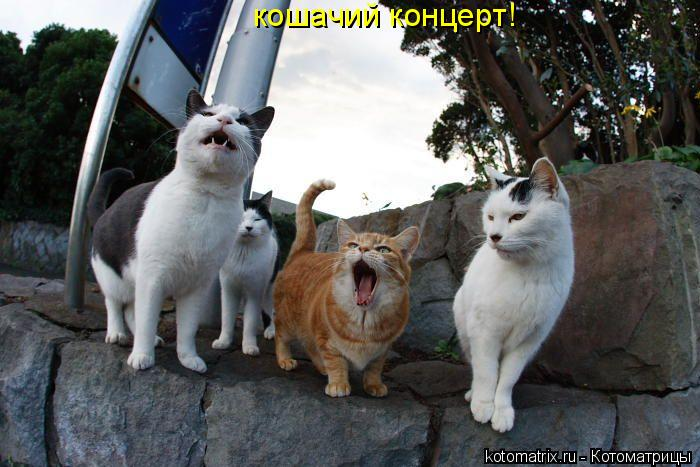 Котоматрица: кошачий концерт!