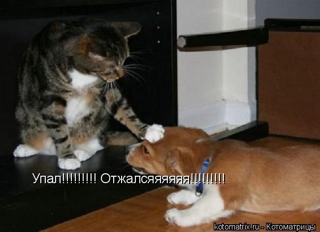 Котоматрица: Упал!!!!!!!!! Отжалсяяяяяя!!!!!!!!!