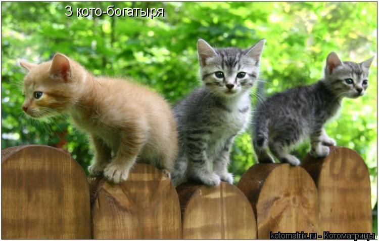 Котоматрица: 3 кото-богатыря