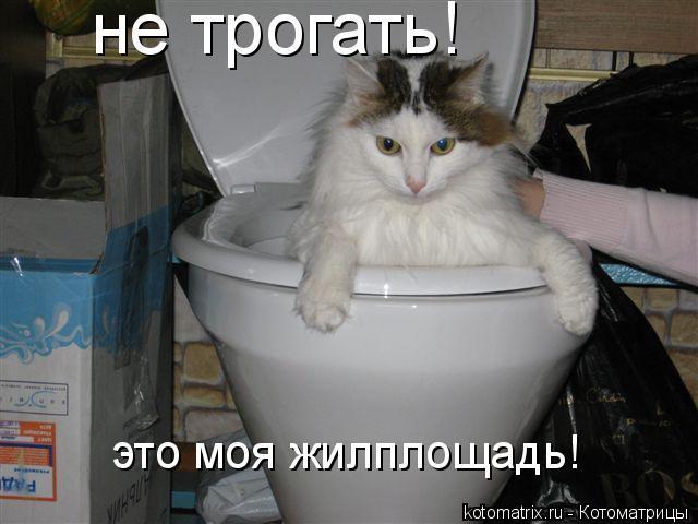 Котоматрица: не трогать! это моя жилплощадь!