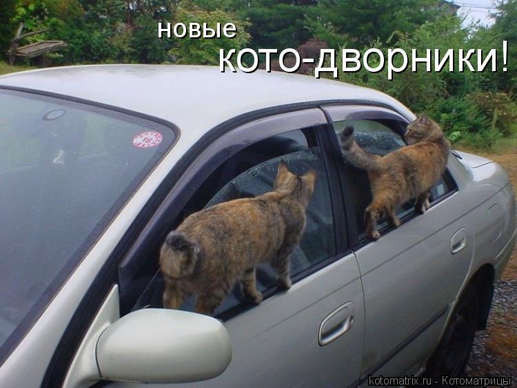 Котоматрица: новые кото-дворники!