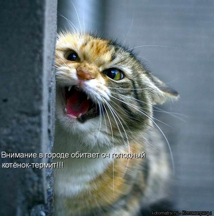 Котоматрица: Внимание в городе обитает оч голодный котёнок-термит!!!