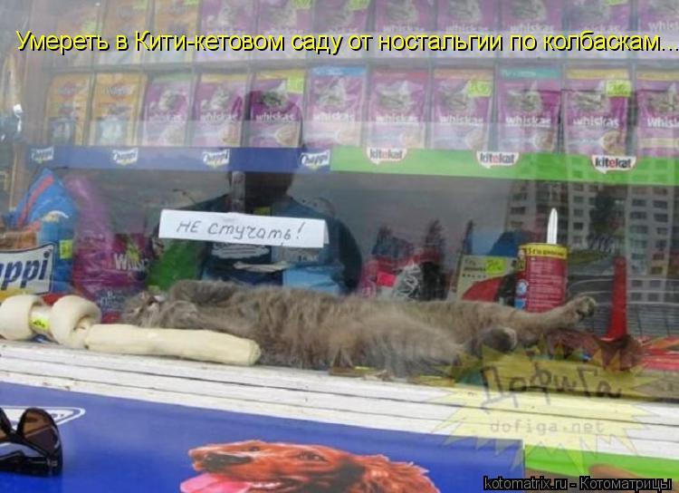 Котоматрица: Умереть в Кити-кетовом саду от ностальгии по колбаскам...