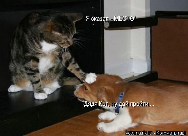 Котоматрица: -Дядя Кот, ну дай пройти.... -Я сказал - МЕСТО!