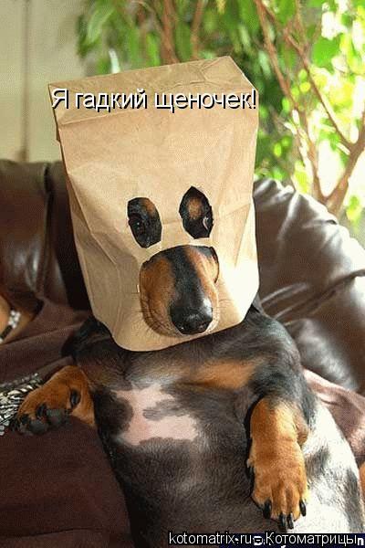 Котоматрица: Я гадкий щеночек!
