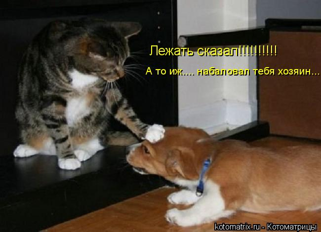 Котоматрица: Лежать сказал!!!!!!!!!! А то иж.... набаловал тебя хозяин....
