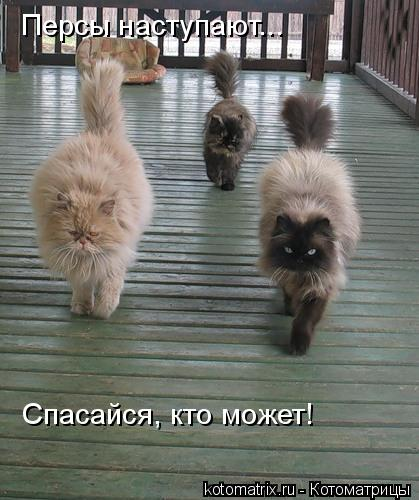 Котоматрица: Персы наступают... Спасайся, кто может!