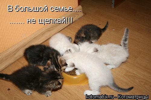 Котоматрица: В большой семье.... ....... не щелкай!!!
