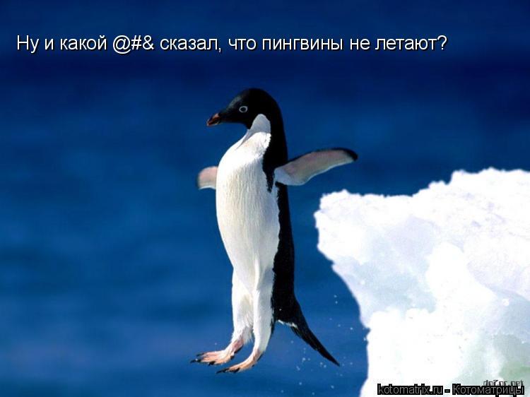 Котоматрица: Ну и какой @#& сказал, что пингвины не летают?