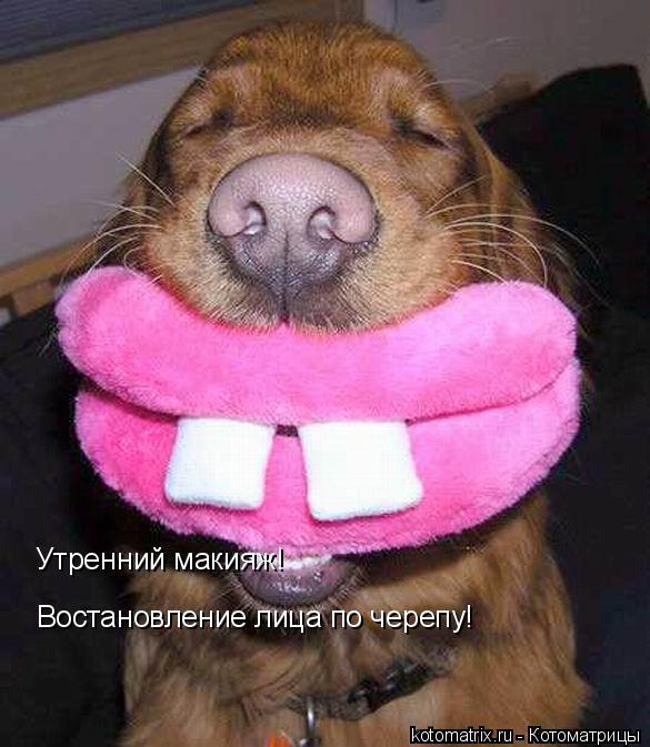 Котоматрица: Утренний макияж!  Востановление лица по черепу!